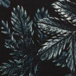 Dark Leaves Petrol