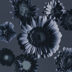 Tinted Flowers by Cherry Picking