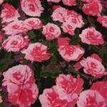 Baumwollstoff Roses